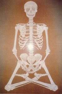 47.Bone View插图